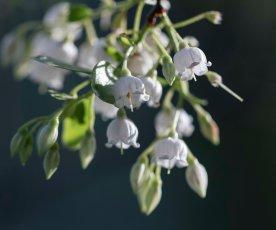 white wildflowerssm